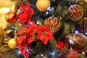 【聖なる一日に】特別試食メニューをご用意☆クリスマス特別試食付・見学相談会